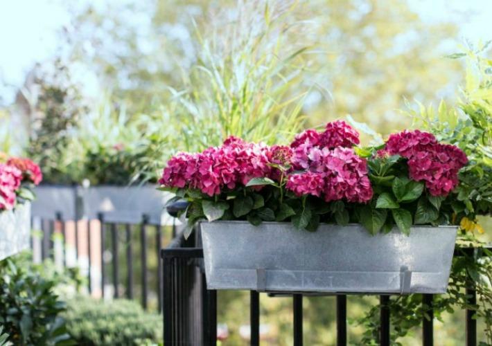 Siembra plantas arom ticas en tu balc n alto lago for Plantas para balcones